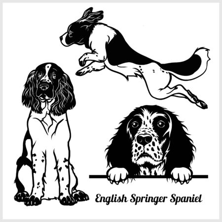 English Springer Spaniel - vector illustration for t-shirt and template badges
