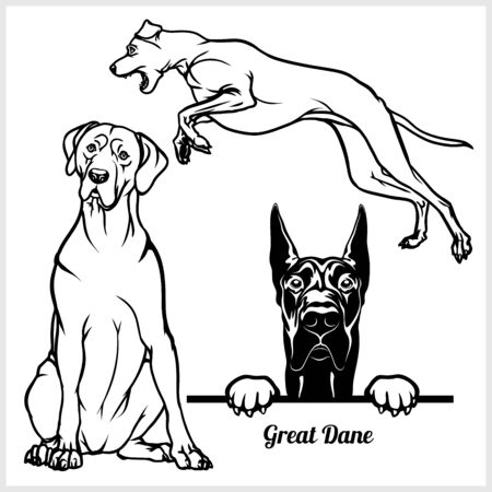 Great Dane - vector illustration for t-shirt and template badges