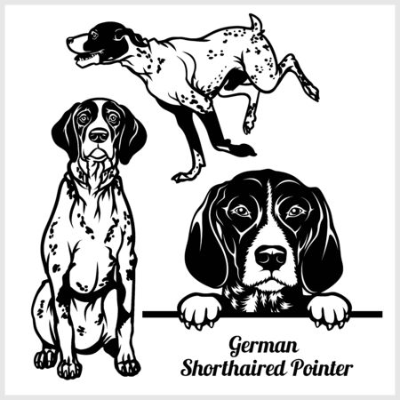 German Shorthaired Pointer - vector illustration for t-shirt and template badges