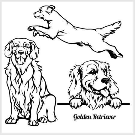 Golden Retriever - vector illustration for t-shirt and template badges