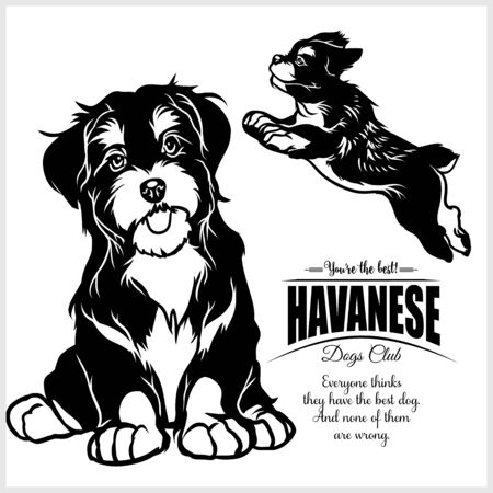 Havanese - vector illustration for t-shirt and template badges