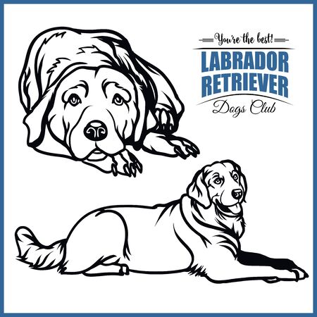 Labrador Retriever - vector illustration for t-shirt and template badges