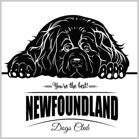 Newfoundland - vector illustration for t-shirt and template badges