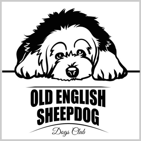 Old English Sheepdog - vector illustration for t-shirt, logo and template badges Stock Vector - 132152461