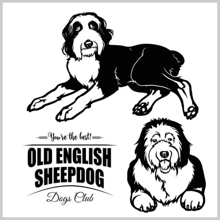 Old English Sheepdog - vector set isolated illustration on white background Çizim