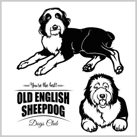 Old English Sheepdog - vector set isolated illustration on white background Illustration