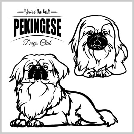 Pekingese - vector set isolated illustration on white background