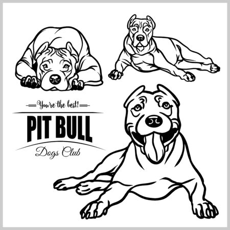 Pit Bull - vector set isolated illustration in black color on white background Çizim