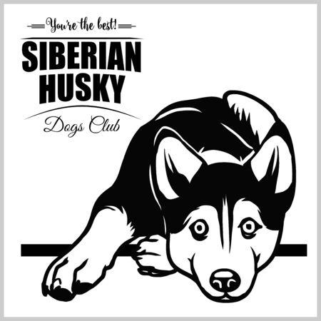 Siberian Husky - vector illustration for t-shirt, logo and template badges Stock Vector - 132152467