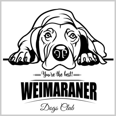 Weimaraner - vector illustration for t-shirt, logo and template badges
