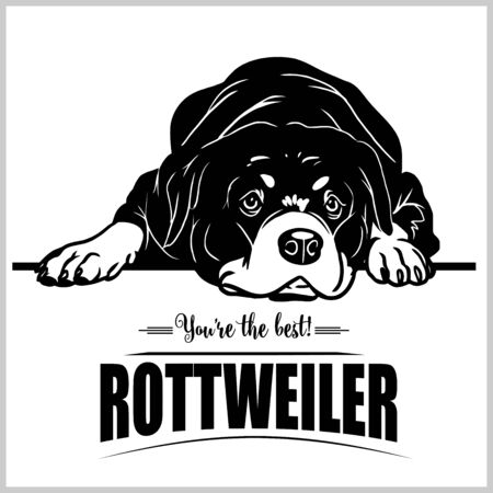 Rottweiler - vector illustration for t-shirt, logo and template badges Stock Vector - 132152478