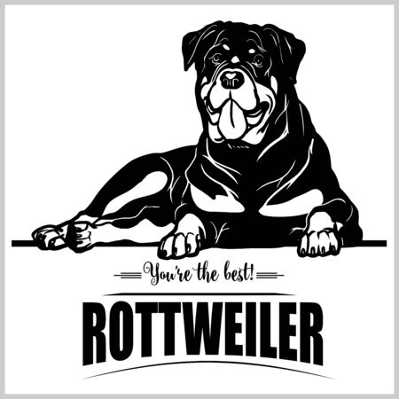 Rottweiler - vector illustration for t-shirt, logo and template badges Stock Vector - 132152477