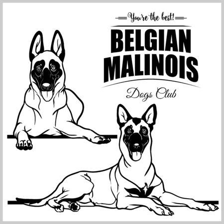 Belgian Malinois - vector set isolated illustration on white background 일러스트