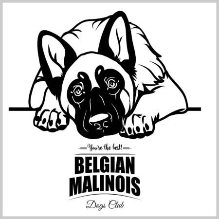 Belgian Malinois - vector illustration for t-shirt, logo and template badges
