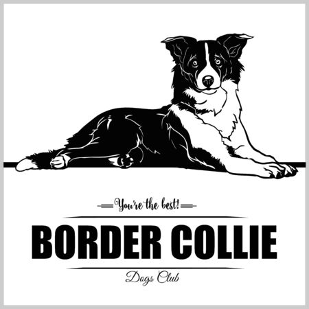 Border Collie Dog - vector illustration for t-shirt, logo and template badges