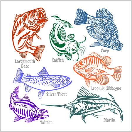 American Fish - vector set for creative design, t-shirt, badge and logo. Isolated on white.