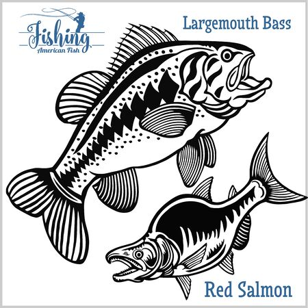Largemouth Bass and Red Salmon - fishing on usa isolated on white