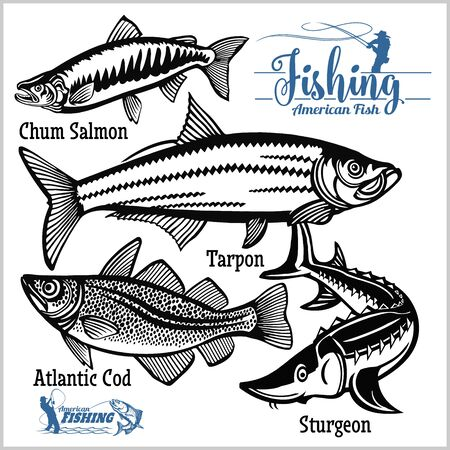 Atlantic Cod, Chum Salmon, Tarpon and Sturgeon - vector set fishing on usa isolated on white Çizim