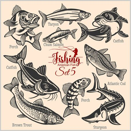 American Fish - vector set 5 for creative design, t-shirt, badge and logo. Isolated on black.  イラスト・ベクター素材