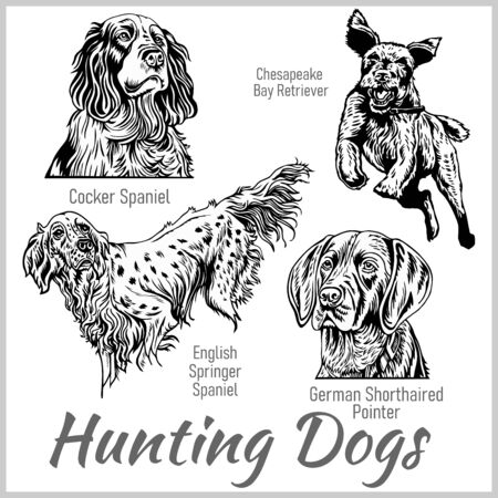 Hunting dogs collection isolated on white. Vector illustration isolated on white