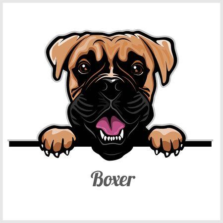 Echar un vistazo a la cabeza de perro boxer