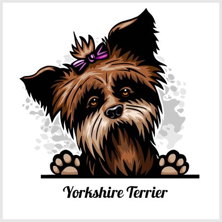 Yorkshire Terrier - Peeking Dogs - breed face head isolated on white Illustration