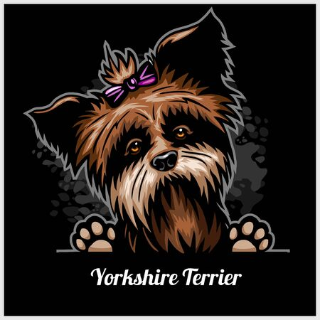 Yorkshire Terrier - Peeking Dogs - breed face head isolated on black 向量圖像