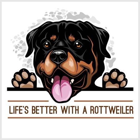 Rottweiler - Peeking Dogs - breed face head isolated on white Illustration