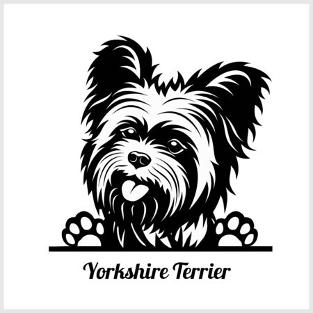 dog head, Yorkshire Terrier breed, black and white illustration