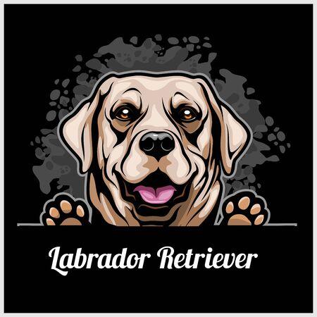 Color dog head, Labrador Retriever breed on black background