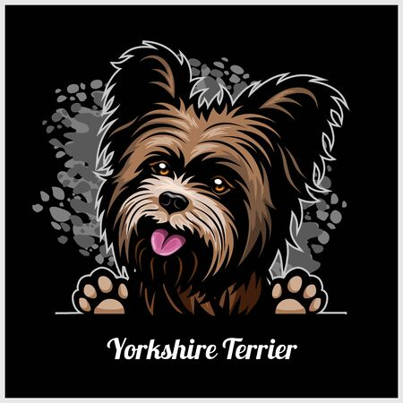 Color dog head, Yorkshire Terrier breed on black background