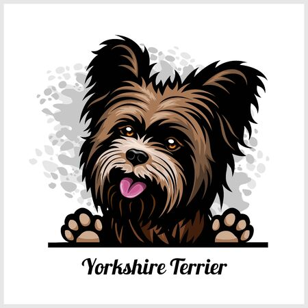 Color dog head, Yorkshire Terrier breed on white background