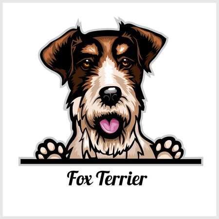 Color dog head, Fox Terrier breed on white background