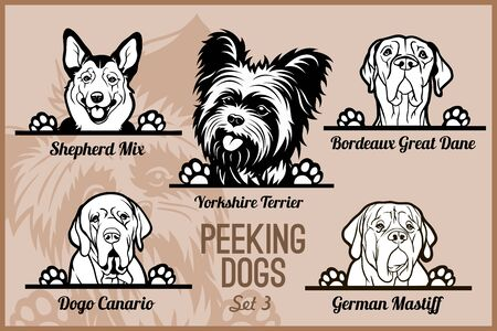 Peeking Dogs - vector set. Heads and paws - dog breeds, black and white illustration and breeds names.