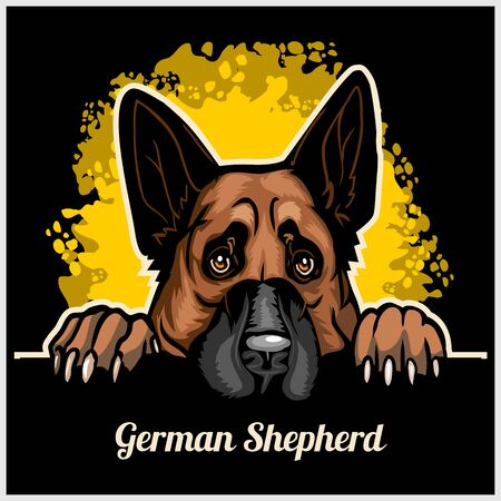 Color dog head, German Shepherd breed on black background