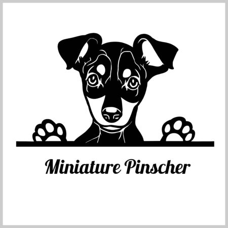 Raza de perro pinscher miniatura - perros que miran a escondidas - cabeza de la cara de la raza aislada en blanco Ilustración de vector