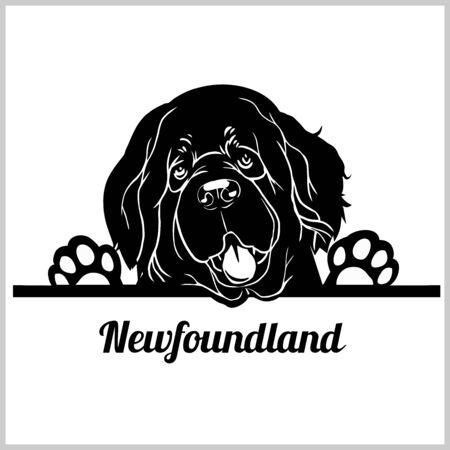 Race de chien de Terre-Neuve - Peeking Dogs - tête de visage de race isolée sur blanc Vecteurs