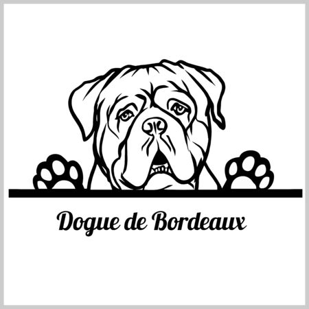 Dogue de Bordeaux Dog Breed - Peeking Dogs - breed face head isolated on white
