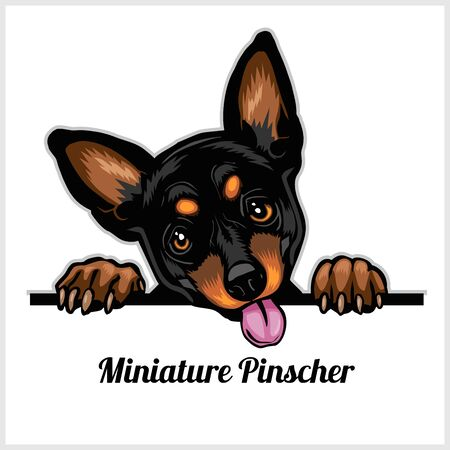 Color dog head, Miniature Pinscher breed on white background