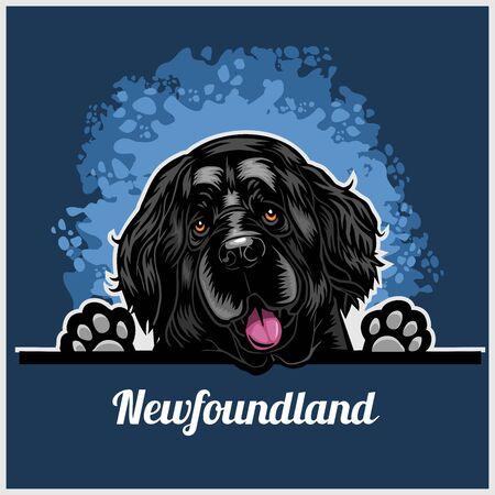 Color dog head, Newfoundland breed on blue background Vector Illustration