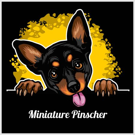 Color dog head, Miniature Pinscher breed on black background