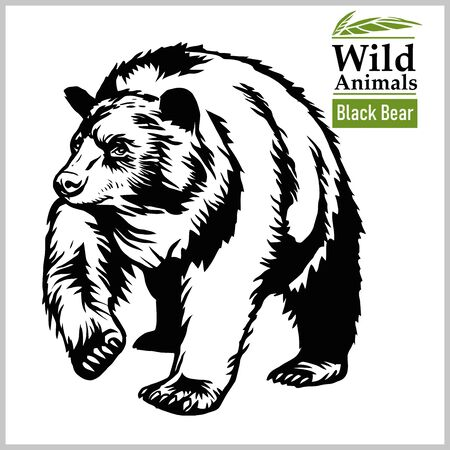 Black Bear - vector illustration in realistic style