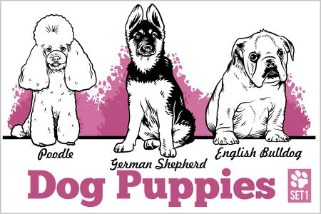 English Bulldog, Poodle and German Shepherd - Dog Puppies. Vector set. Funny dogs puppy pet characters different breads doggy illustration isolated on white.