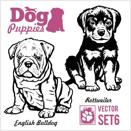 Englische Bulldogge und Rottweiler - Hundewelpen. Vektor-Set. Lustige Hundewelpenhaustiercharaktere verschiedene Brothündchenillustration lokalisiert auf Weiß.