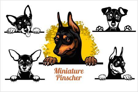 Miniature Pinscher - peeking dogs vector set. Dog head, breed on white Ilustración de vector
