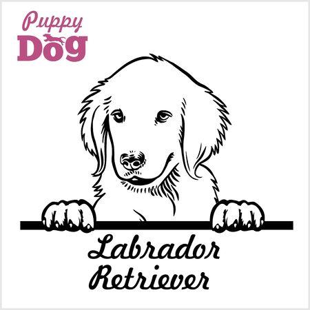 Puppy Labrador Retriever - Peeking Dogs - breed face head isolated on white