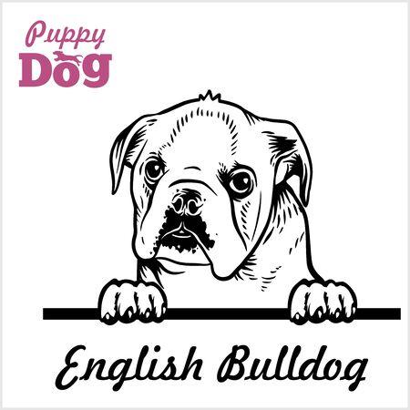 Puppy English Bulldog - Peeking Dogs - breed face head isolated on white