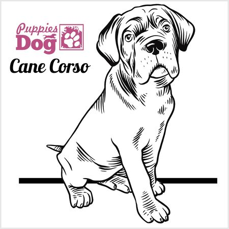 Cane Corso puppy sitting. Drawing by hand, sketch. Engraving style, black and white vector image.