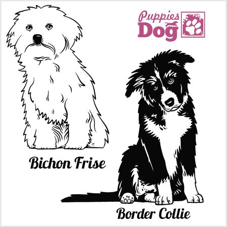 Bichon Frise and Border Collie puppy sitting. Drawing by hand, sketch. Engraving style, black and white vector image. Illustration