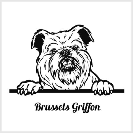 Brussels Griffon - Peeking Dogs - breed face head isolated on white